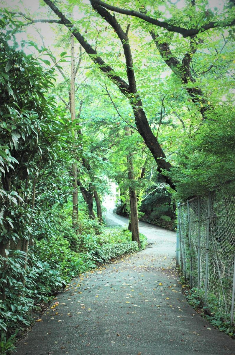 Cultural asset_Shirogane_Tokyo